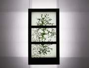 transparent stained window