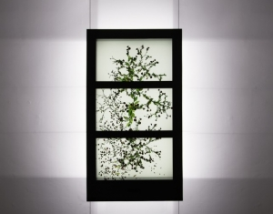 Even Stained Glass Windows can Benefit from Transparent Technology