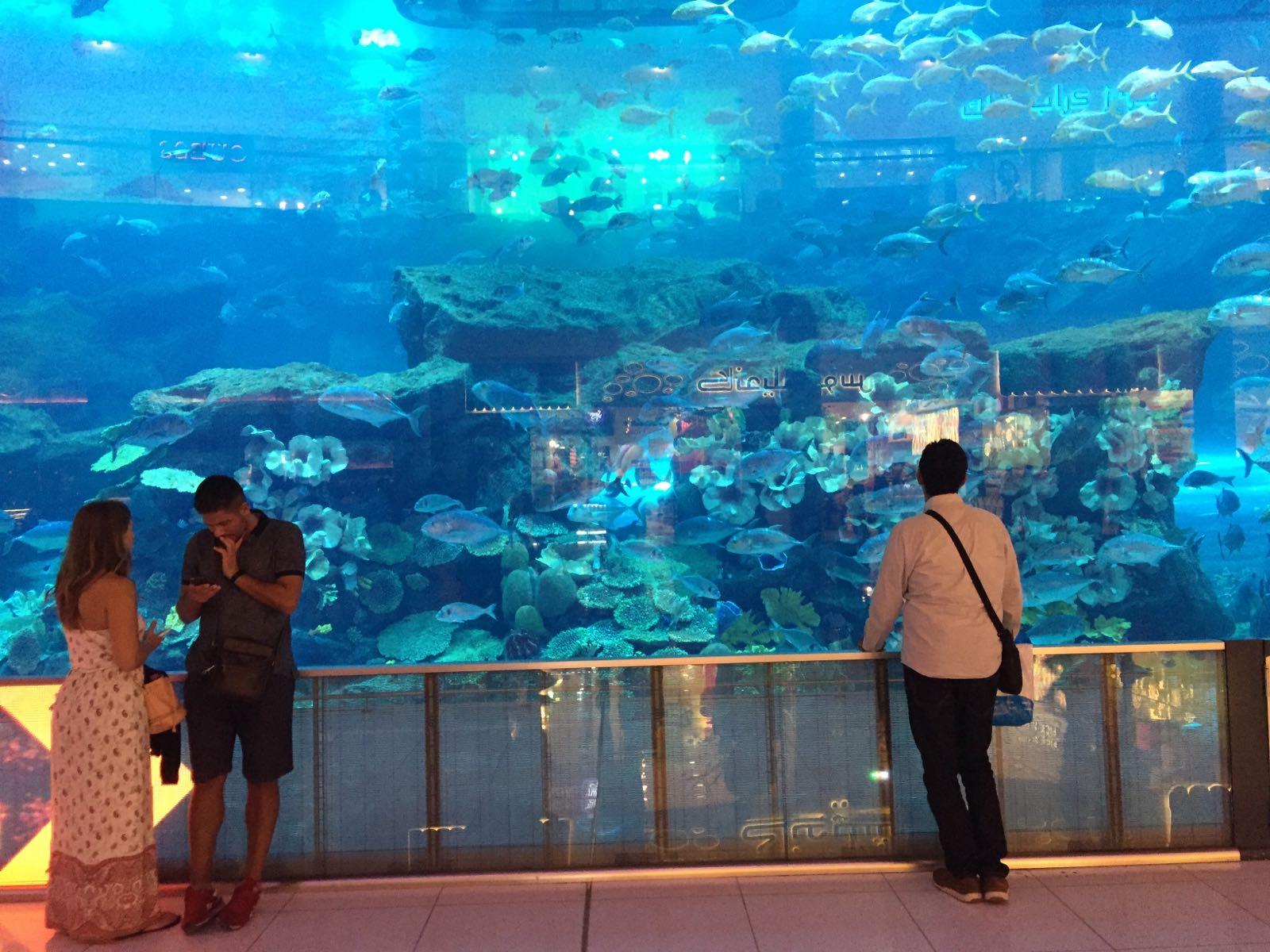 tglass-aquarium1