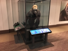 Museum wide stretched displays