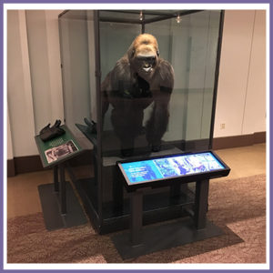 Read more about the article Stretched Display Installs by CDS's Clever Customers
