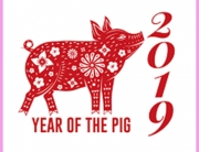 CDS year of the pig 2019