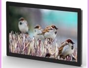 cds monitor bird